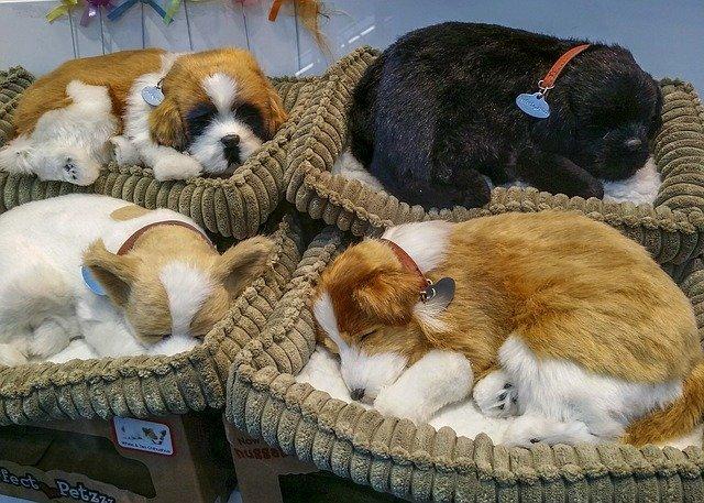 Jak uzpůsobit domov příchodu psího kamaráda?