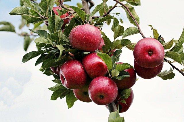 Jablečné octy a balsamica nemusí být jen k jídlu