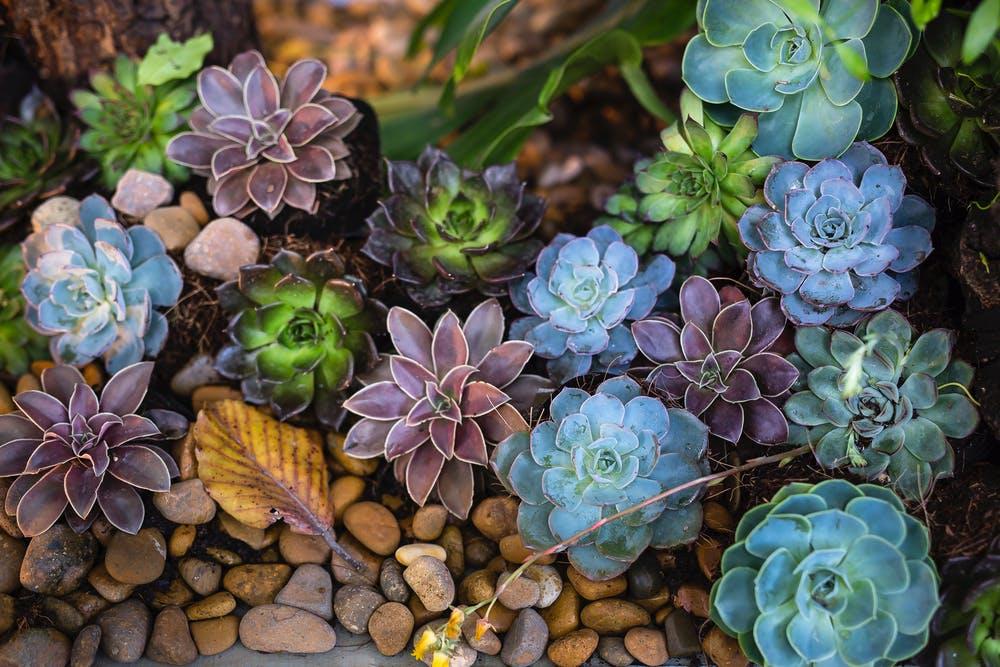 květiny v kameni